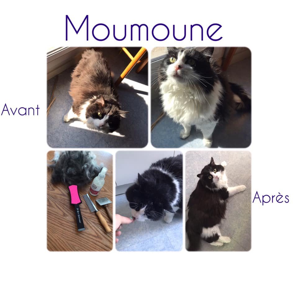 Moumoune Avant/Après toilettage CHIC ANIMALS | COCORICOO.fr