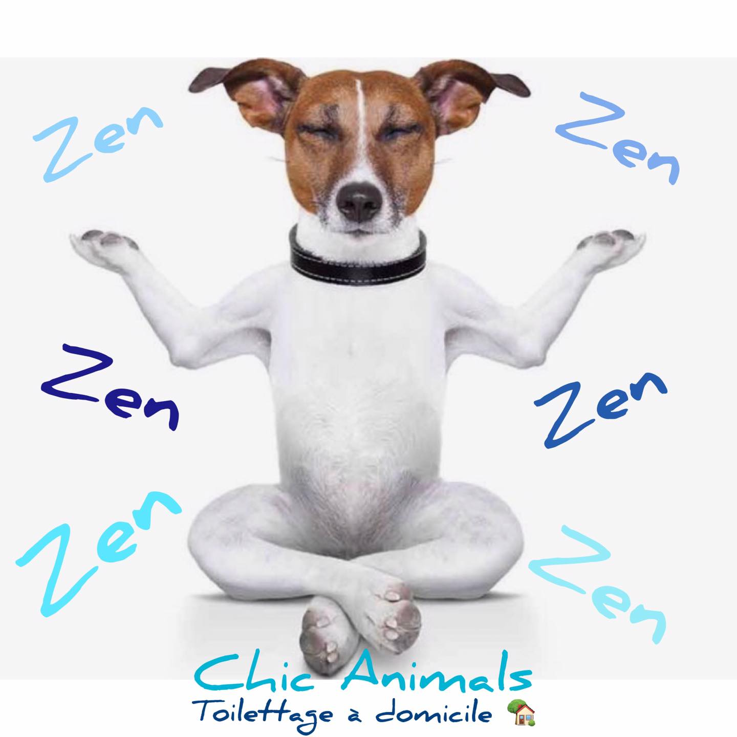 Zen Chic animals | COCORICOO.fr